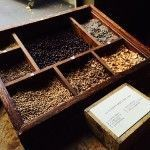 hierbas medicinales anís