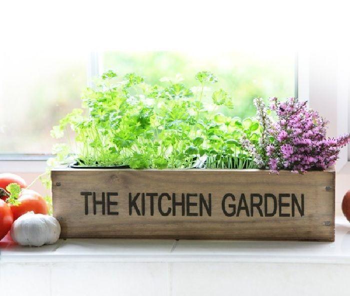 10 plantas medicinales en la cocina