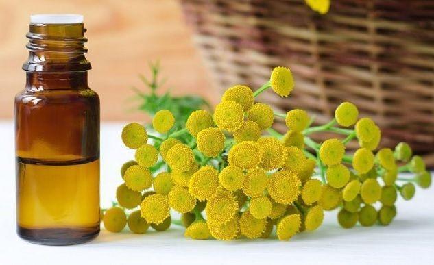 aceite de tanaceto y remedios curativos