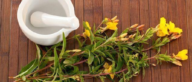 beneficios y propiedades del aceite de onagra