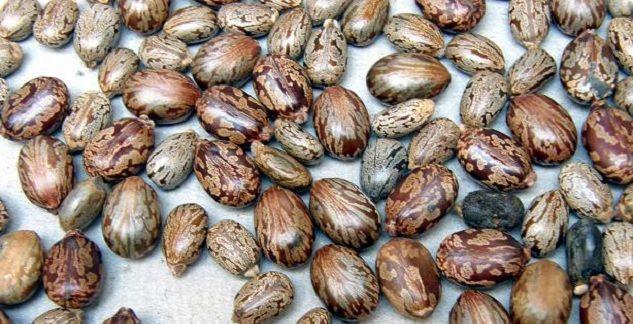 propiedades del aceite de ricino y sus semillas