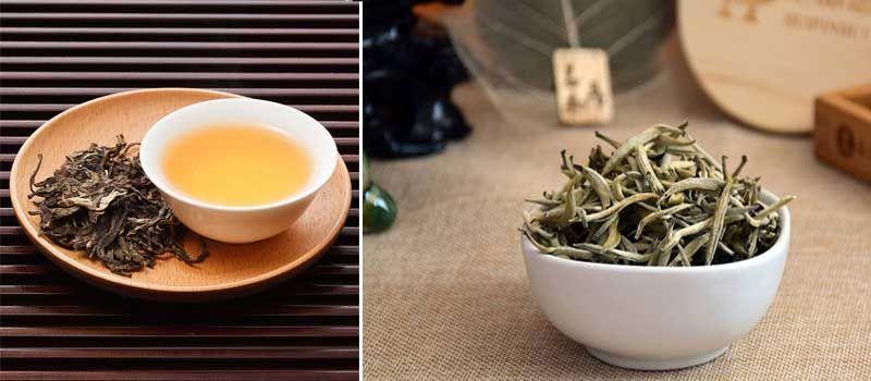 beneficios y propiedades del té blanco