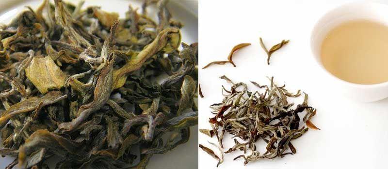 disfruta de las propiedades del té blanco