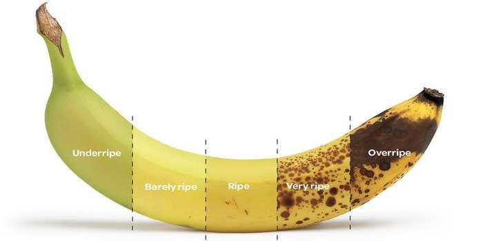 Característiacs y propiedades del plátano