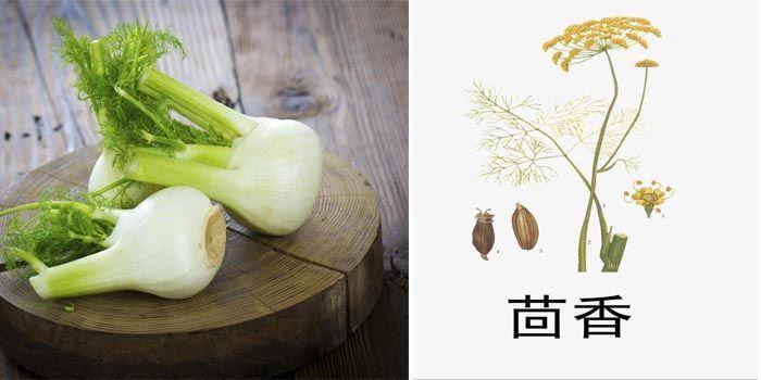Propiedades del hinojo en la medicina tradicional