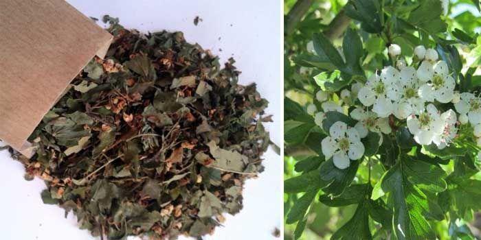 usos y propiedades del espino blanco