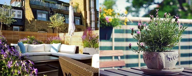 Lavanda para la terraza o balcón