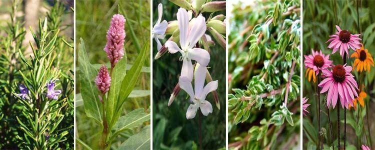 Nombres de plantas medicinales