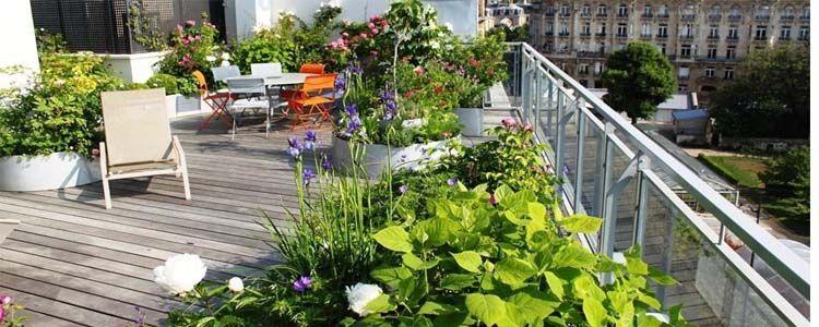 Plantas para la terraza