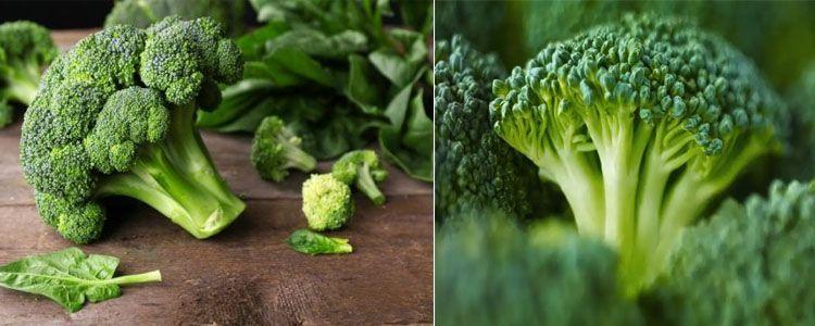 Propiedades beneficioas del brócoli