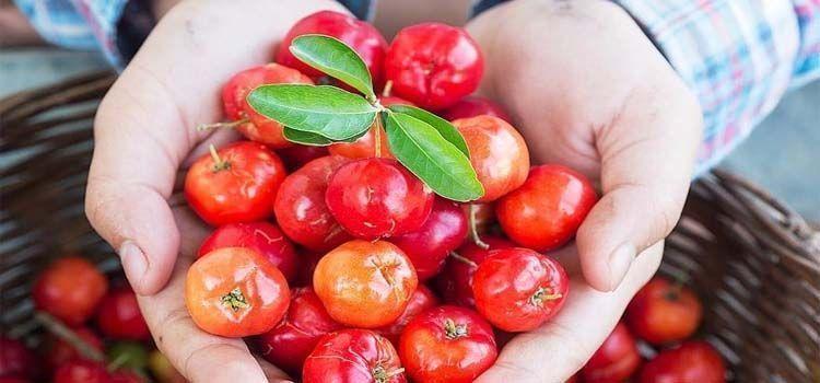Frutos de acerola roja