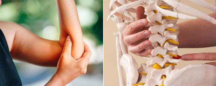 Alimentos con colágeno y su importancia en la salud