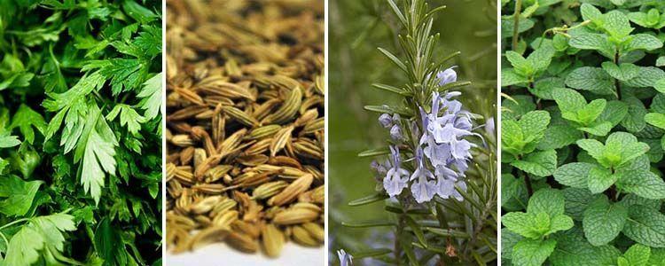 plantas medicinales contra el mal aliento