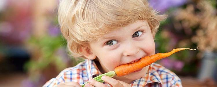 Propiedades de la hortaliza zanahoria