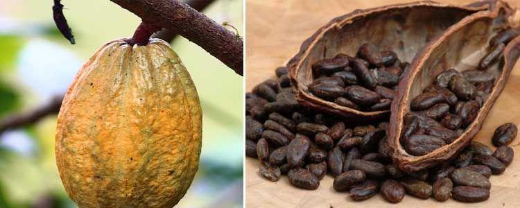 Beneficios y propiedades del chocolate