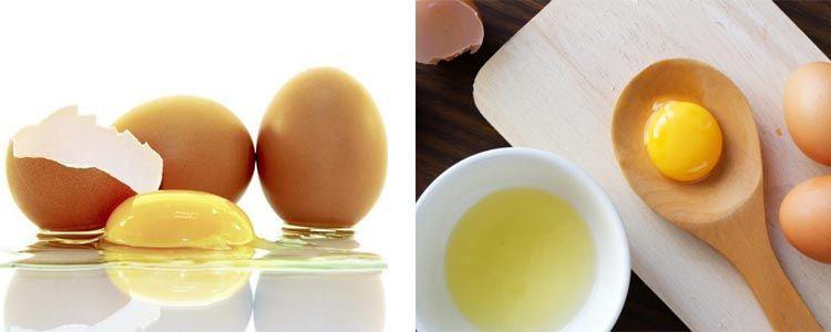 Origen de las proteínas del huevo