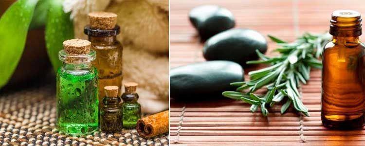 plantas medicinales de árbol del té