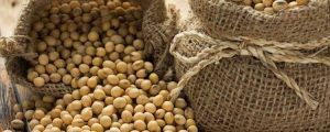 Alergia a la soja y síntomas