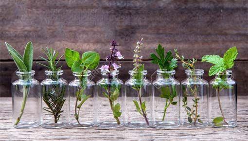 Listado hierbas medicinales