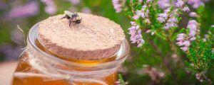 Propiedades de la miel de brezo