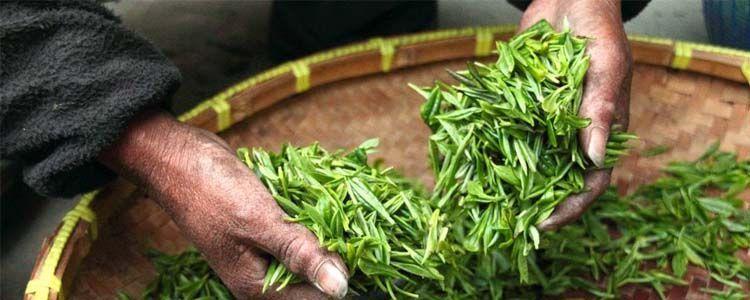 alimentos amargos y té verde