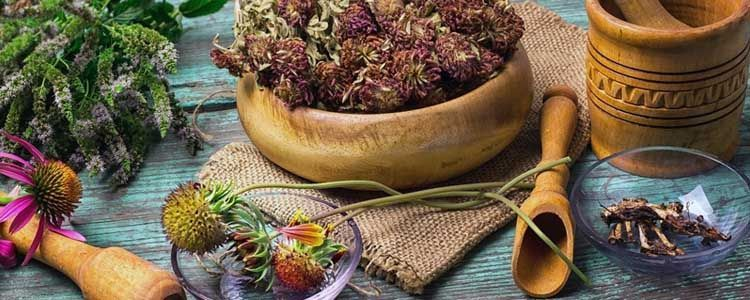 Fitoterapia y uso de hierbas