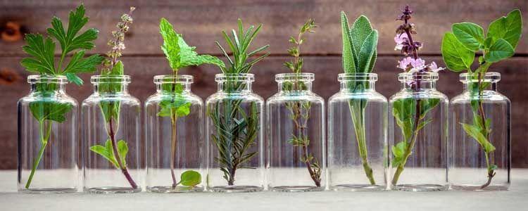 Uso de plantas medicinales en un herbolario