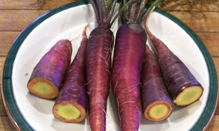 Antocianinas zanahoria morada