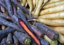 Potencial de las zanahorias moradas