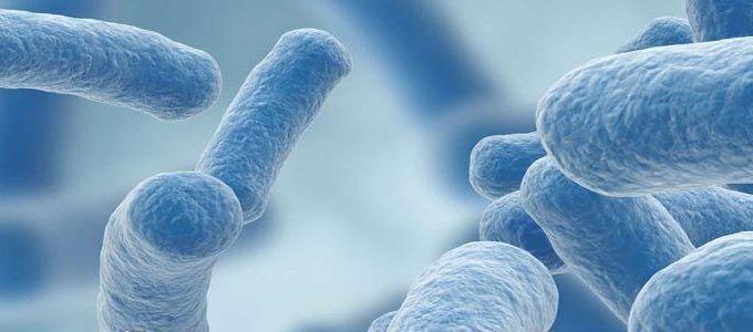 Bacteria Lactobacillus Gasseri