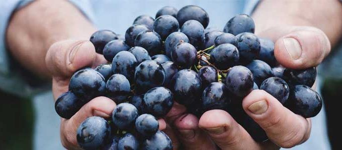 Taninos presentes en el vino